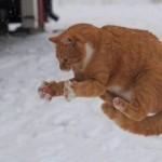Почему беременным нельзя пинать кошек?