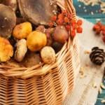 Почему нельзя собирать грибы в високосный год?