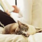 Почему нельзя отгонять от себя кошек?