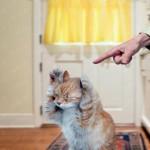 Почему нельзя бить кошек?