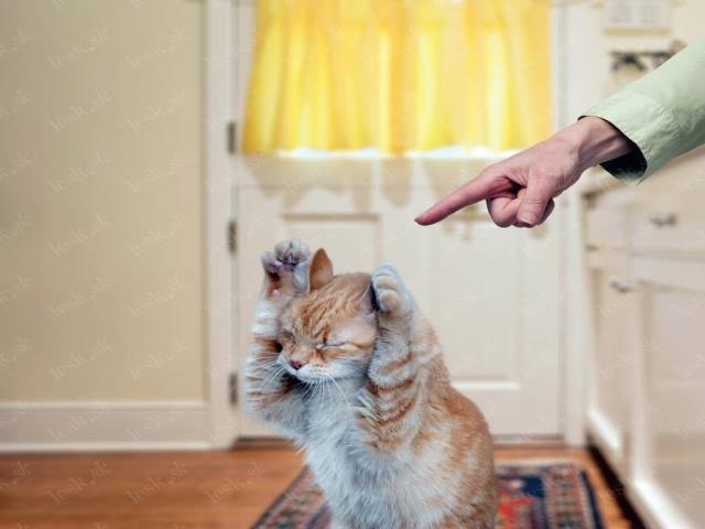 показывает пальцем на кошку