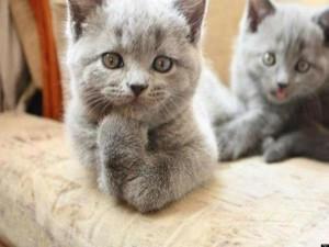 Фото на тему «Чому не можна відганяти від себе кішок?»