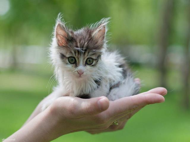 Фото на тему «Чому не можна бити кішок?»