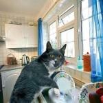 Почему нельзя мыть кошек?