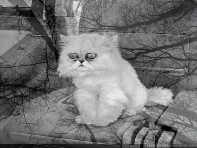 кошка из вконтакте