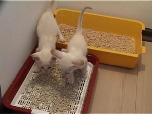 кошачий туалет и два кота