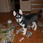 Почему нельзя держать собаку в доме?