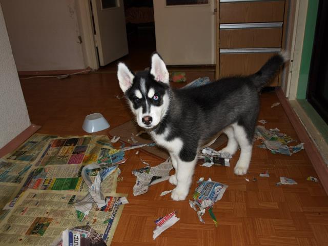 разорванная бумага собакой