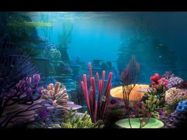 кораллы в океане