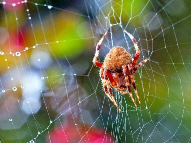 Фото на тему «Почему нельзя убивать пауков дома?»