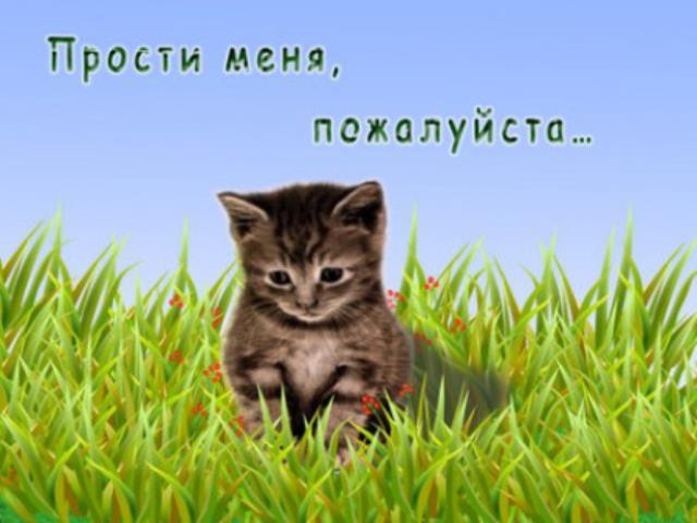 прости меня кот
