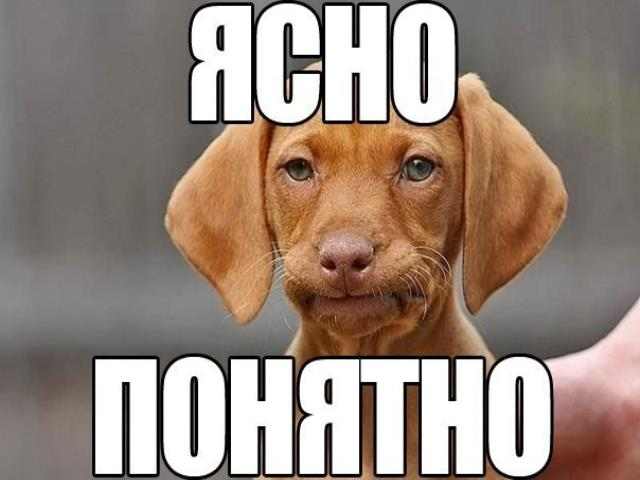 собака говорит ясно