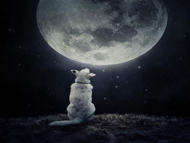 собака смотрит на луну