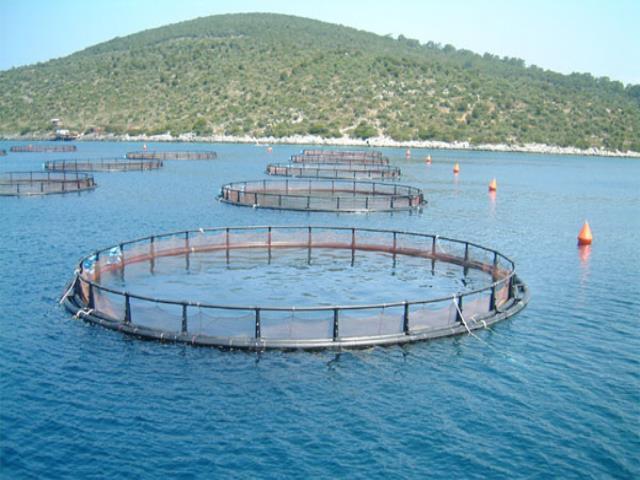 Фото на тему «Почему нельзя использовать морскую воду в хозяйстве?»