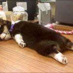 Почему нельзя фотографировать спящих животных?