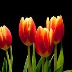 Почему нельзя дарить четное количество цветов?