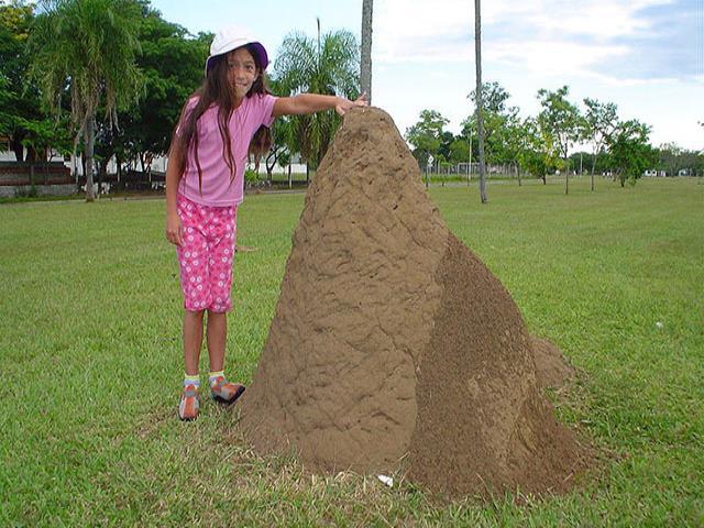 большой муравейник