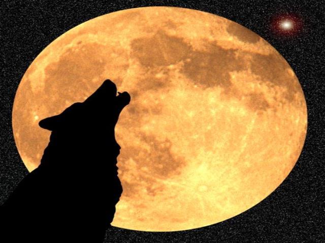 волк воет на полную луну