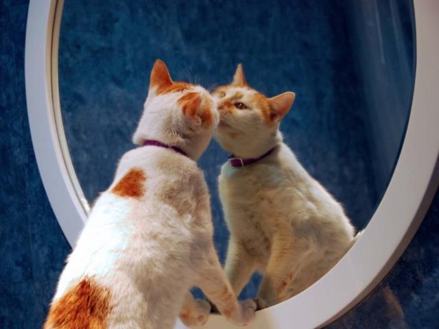 Кота к зеркалу смотри это ты