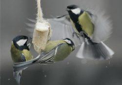 кормить птиц ржаным хлебом