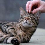 Почему кошек нельзя трогать за хвост?