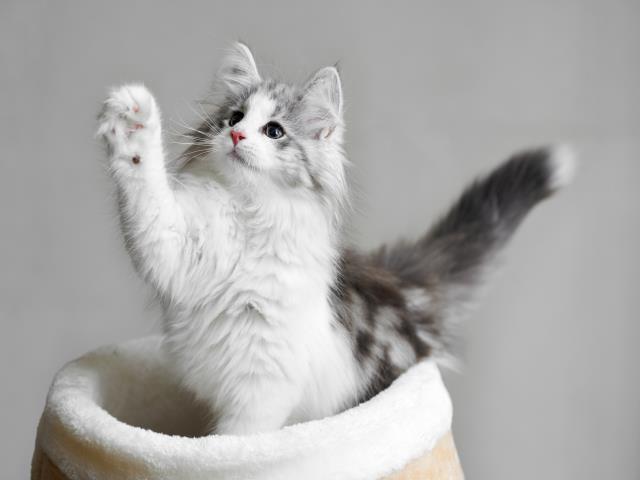 кошек трогать за хвост