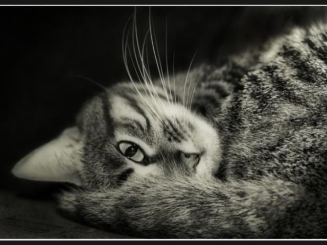 прогонять трущуюся кошку
