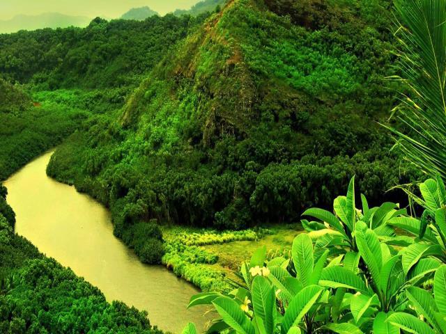 восстановить тропический лес