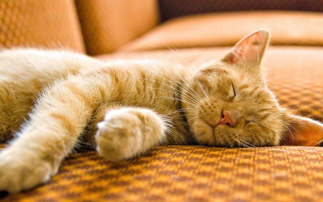 спать с кошкой