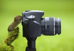 фотографировать животных