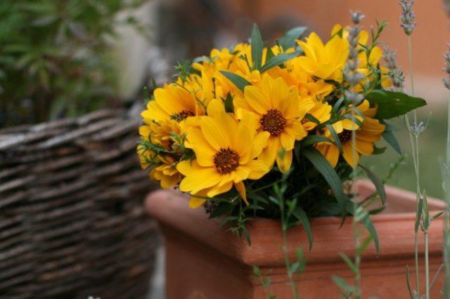 дарить желтые цветы