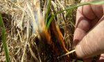 Почему весной нельзя поджигать старую траву?