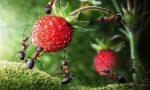 Почему нельзя разорять муравейники?