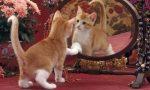 Почему нельзя показывать кошке зеркало?