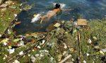 Почему нельзя загрязнять окружающую среду?