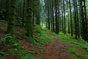 Фото на тему «Почему нельзя шуметь в лесу?»
