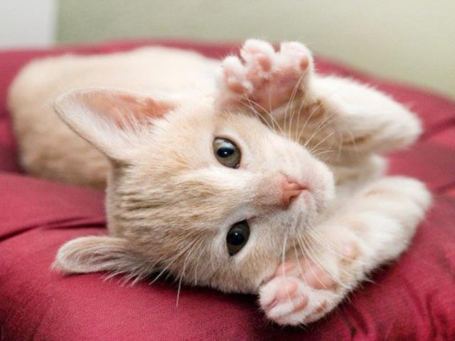 Фото на тему «Почему нельзя отгонять от себя кошек?»