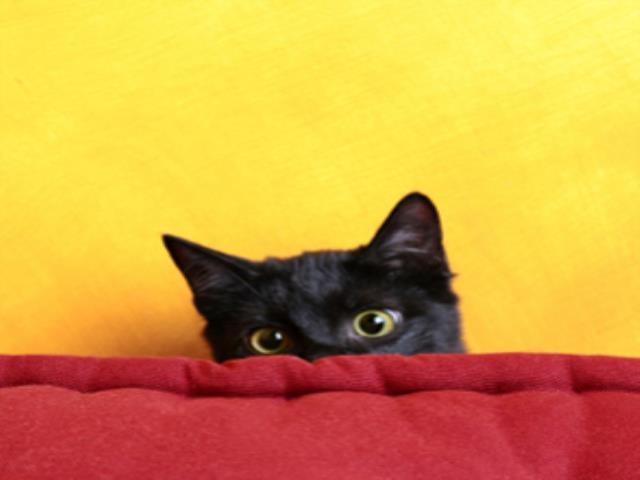 черная кошка выглядывает