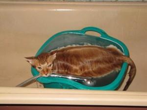 мокрый кот в ванной