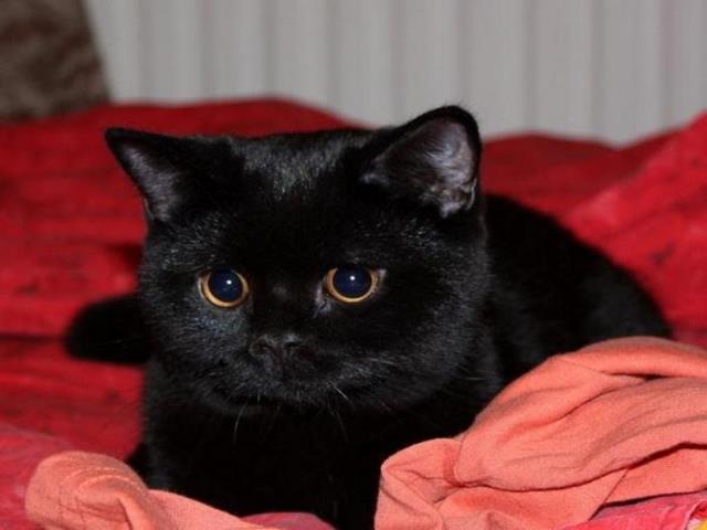 Фото на тему «Чому вагітним не можна штовхати кішок?»