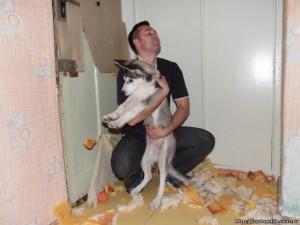 разорванная бумага собакой и хозяин