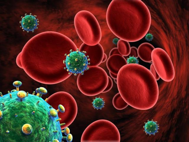 тельца крови
