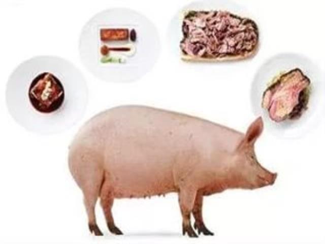 Почему свинину нельзя давать собакам