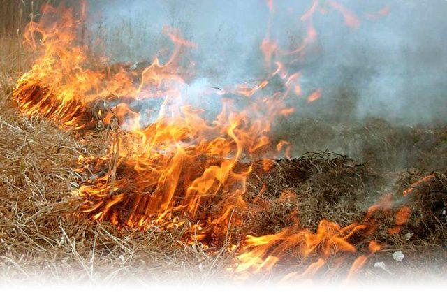 Фото на тему «Почему весной нельзя поджигать старую траву?»