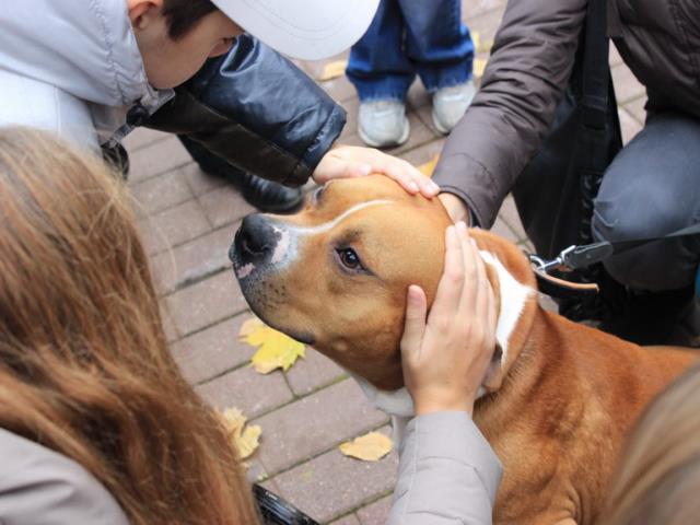 Фото на тему «Чому не можна гладити чужу собаку?»