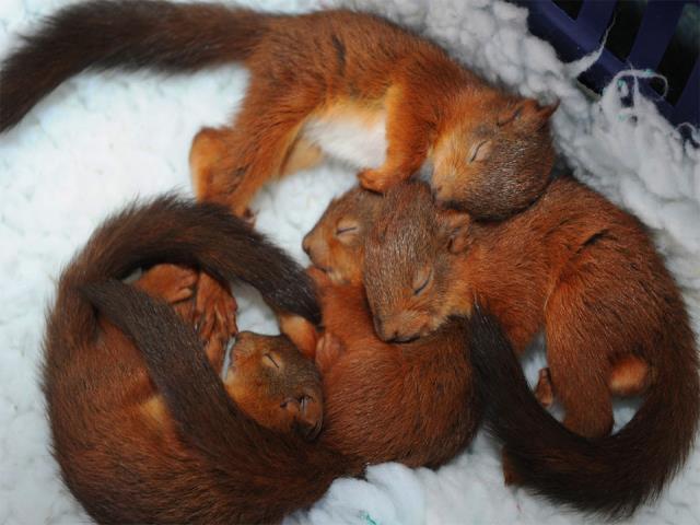 спят белки