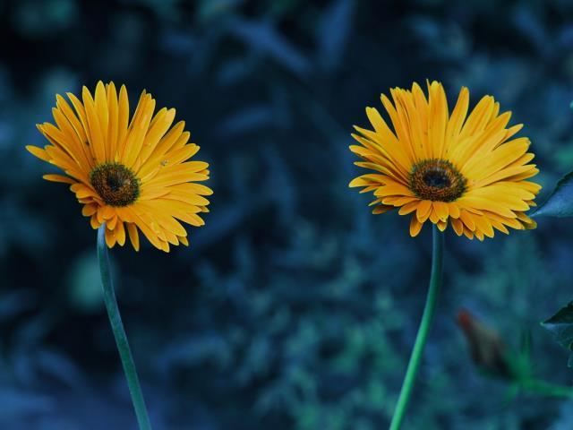 парное число цветов