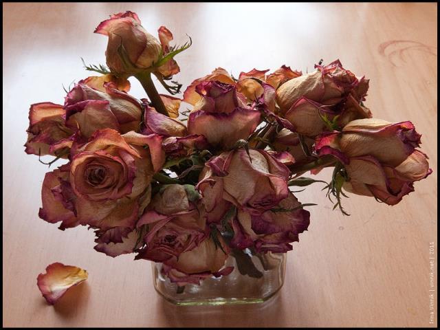 хранить сухие розы дома