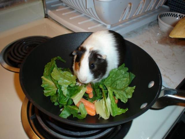 Можно ли хомякам капусту сырую белокочанную