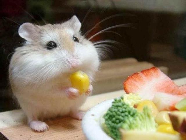 Фото на тему «Почему хомякам нельзя капусту?»
